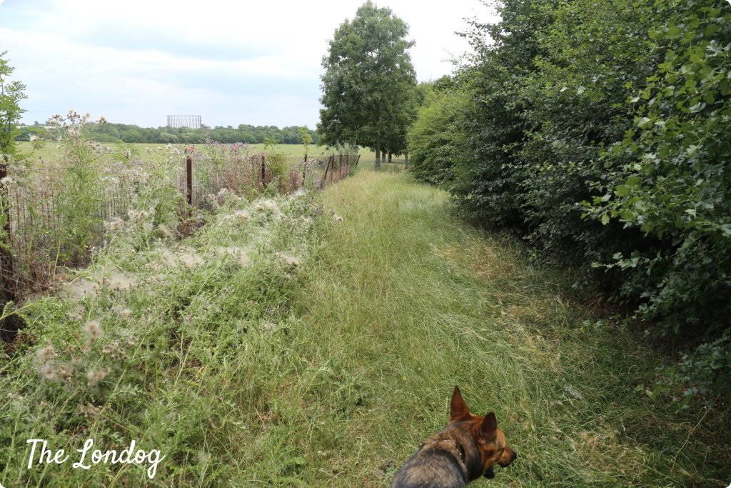 Wormwood Scrubs dog area | The Londog