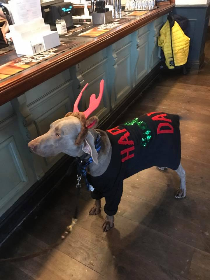 Dog in Xmas Jumper