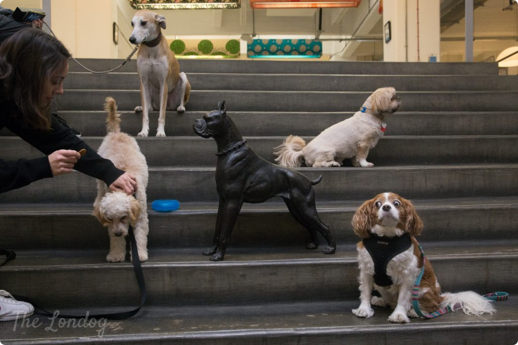 Dogs of Mother London