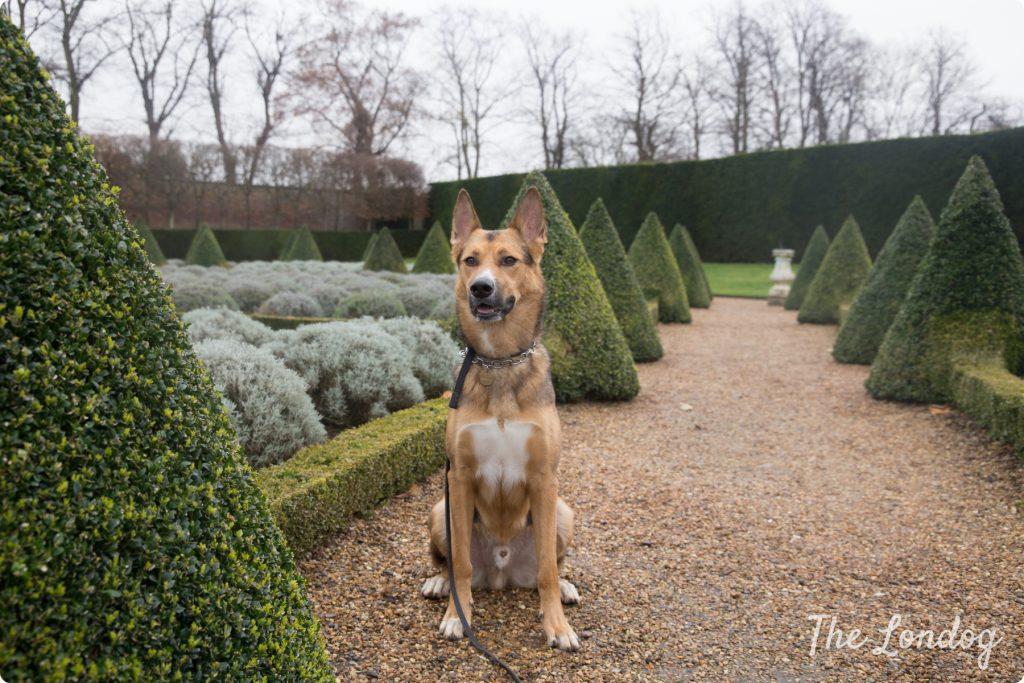 Ham Gardens dog