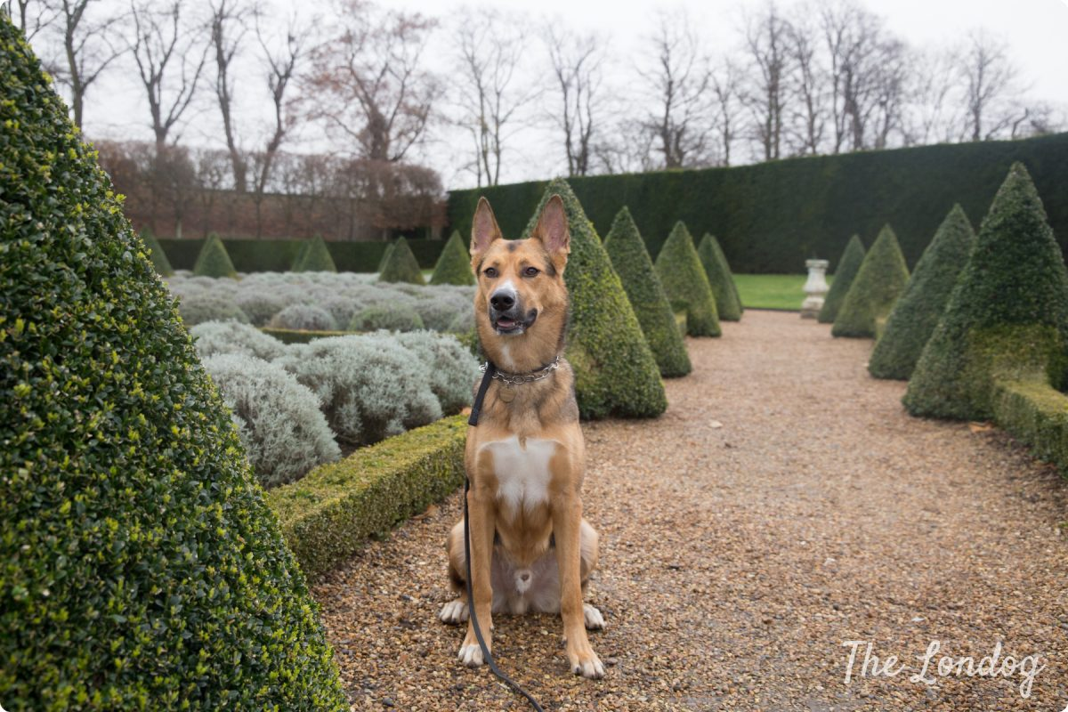 "Ham House and Gardens | Dog-friendly ""Twelve Dogs of Christmas Winter Walkies"""