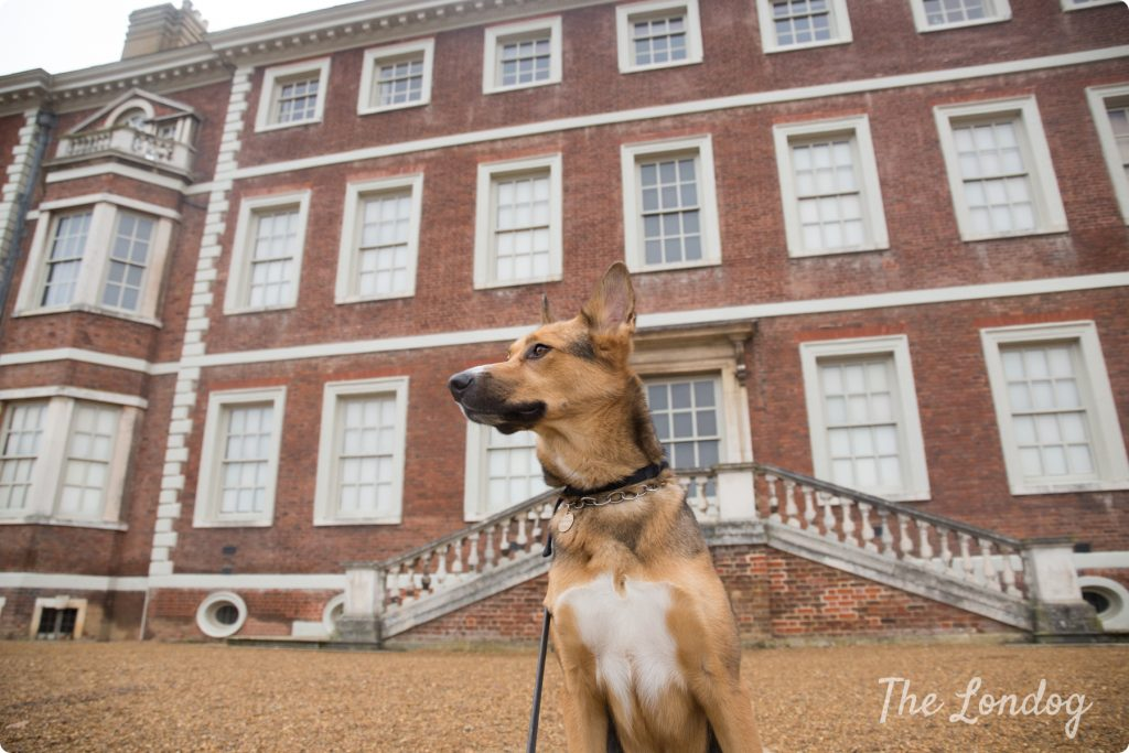 Ham House and Gardends dog