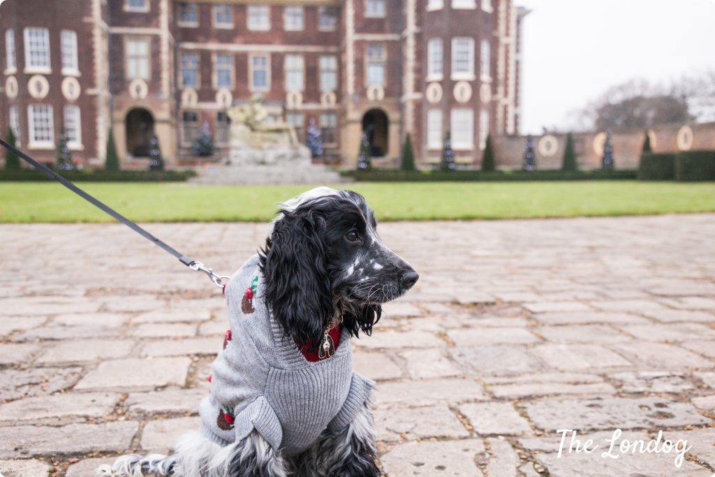 Ham House dog