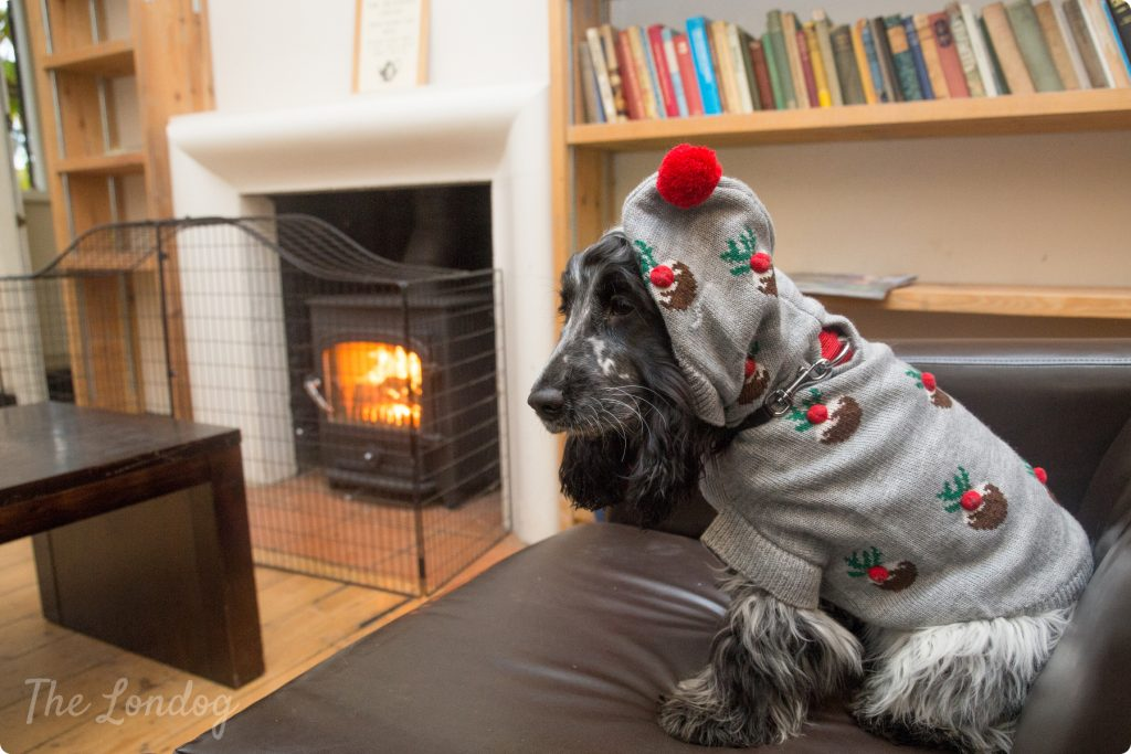 Willow dog in Christmas jumper