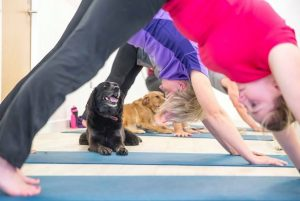 Dog at a DOGA class in London