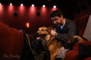 Dog-friendly cinema screening Picturehouse Central