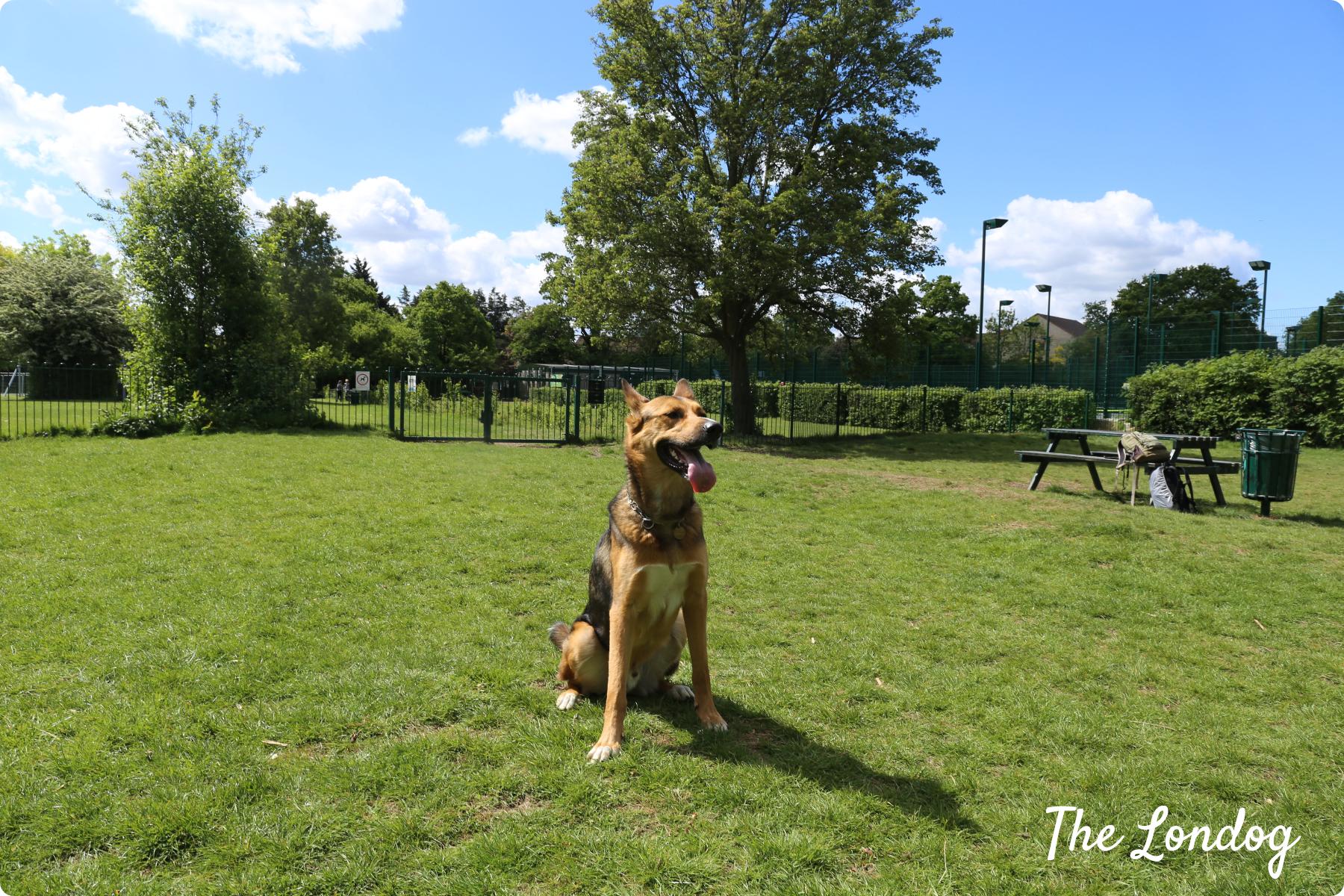 Ridgeway Park dog