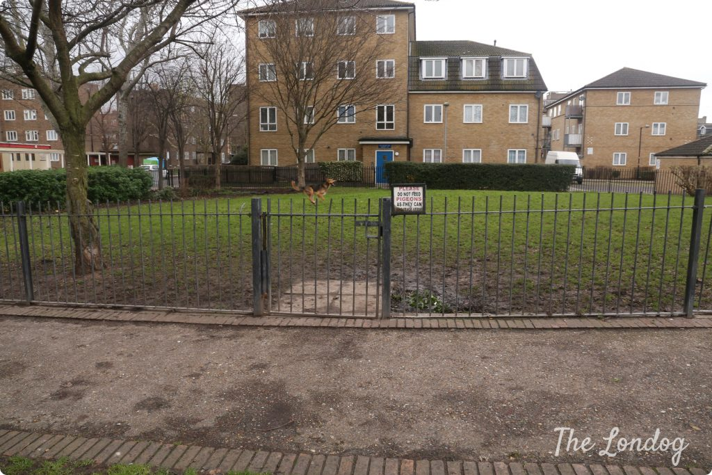 Stepney Green dog area 1