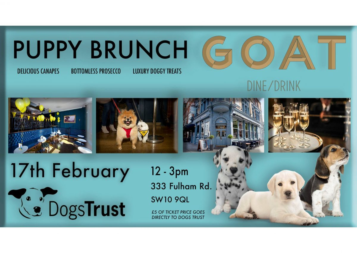 Puppy Brunch at GOAT Chelsea