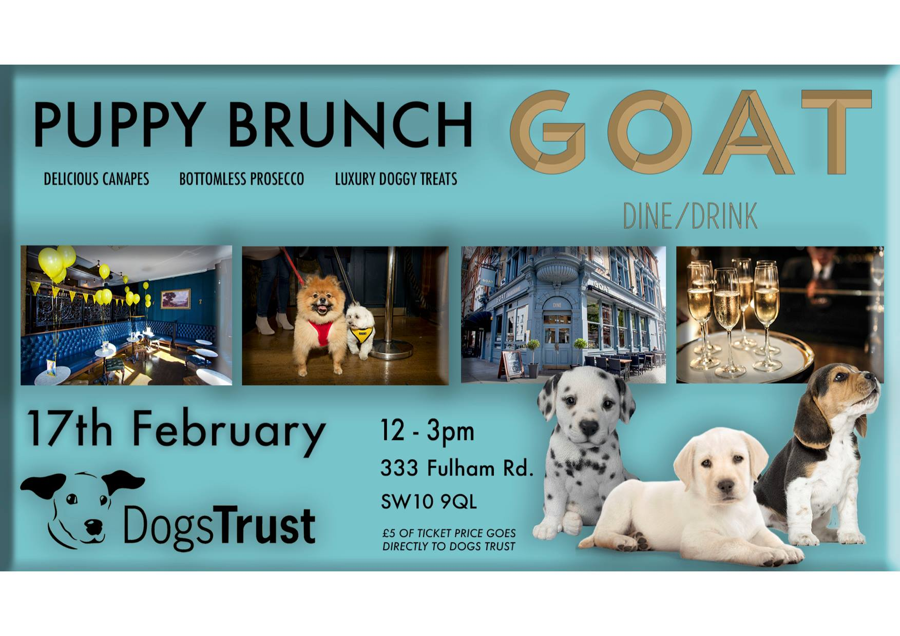 Puppy Brunch at GOAT