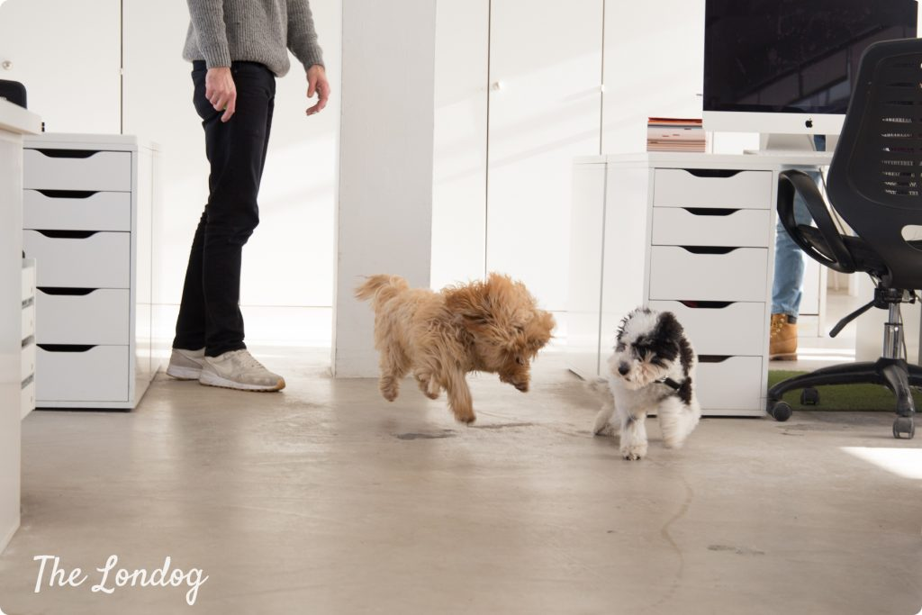 Dogs running at the office