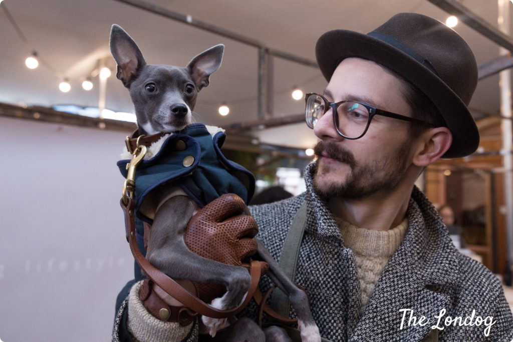 Italian Greyhound dog with owner dressed in hipster clothes