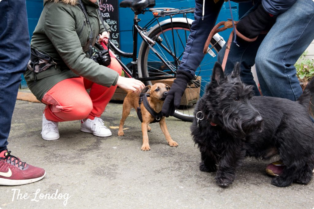 dogs at netil market