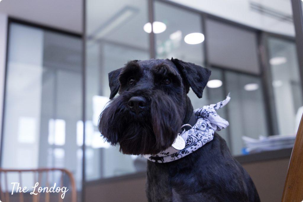 Seb studio dog at TMC