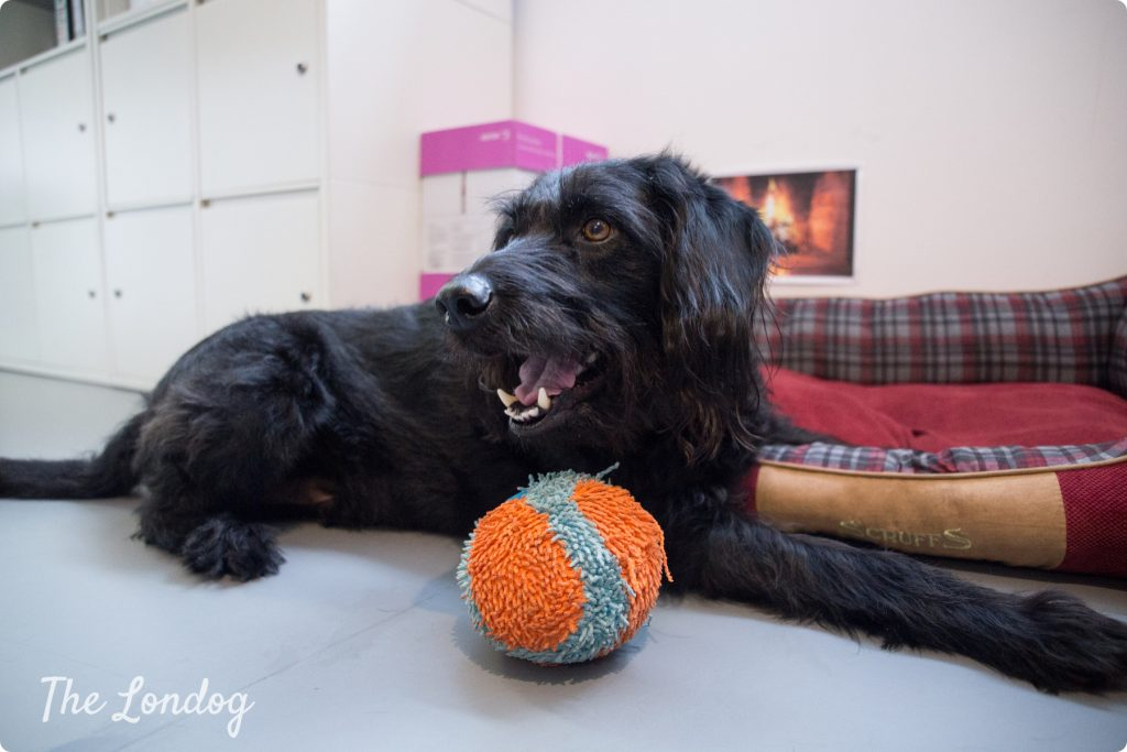Wally of PMA with his ball