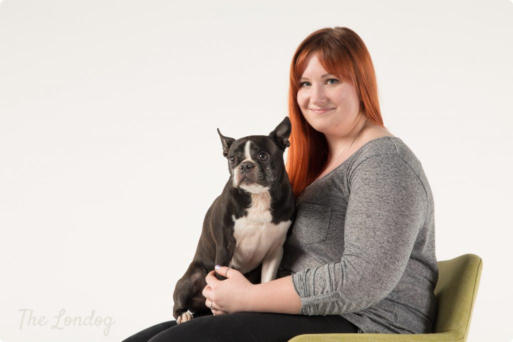 Boston terrier sitting on owner's lap posing as dog photo model
