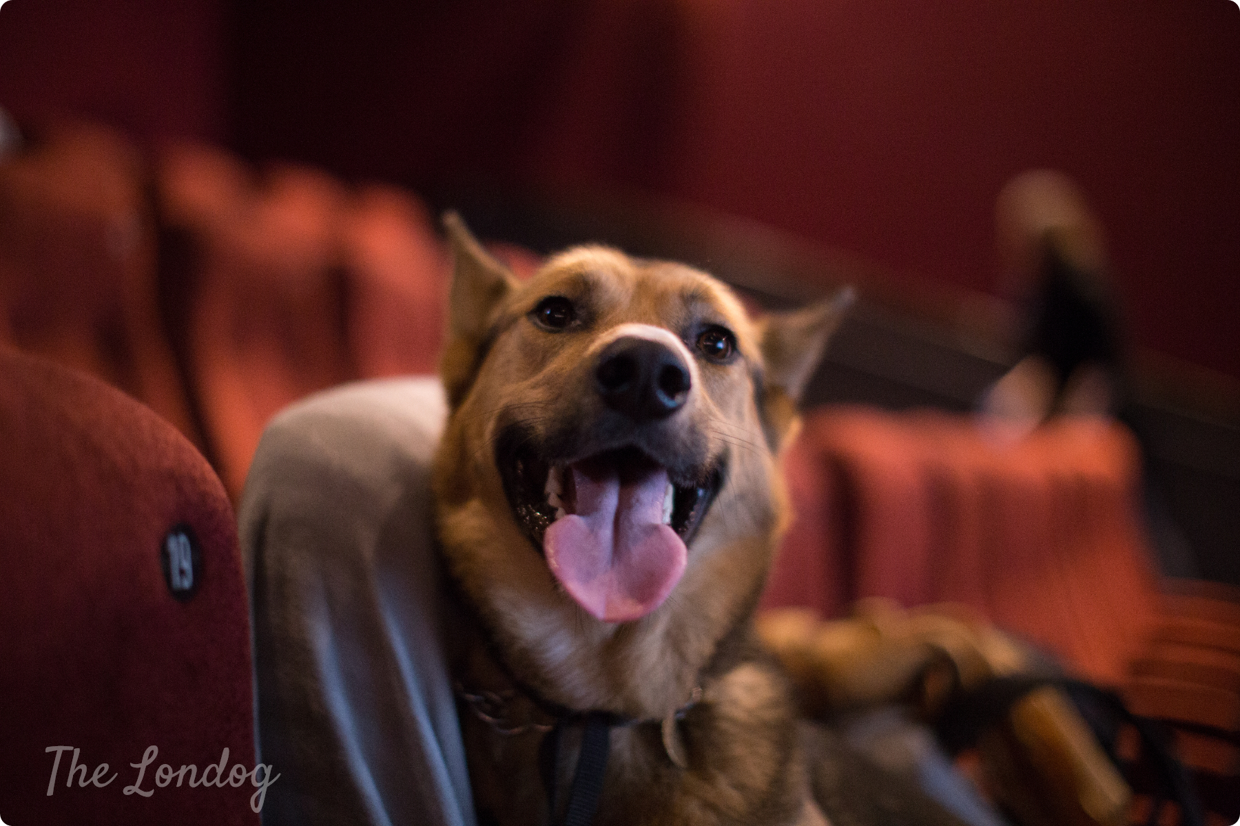 Dog at the cinema in London at Picturehouse Central