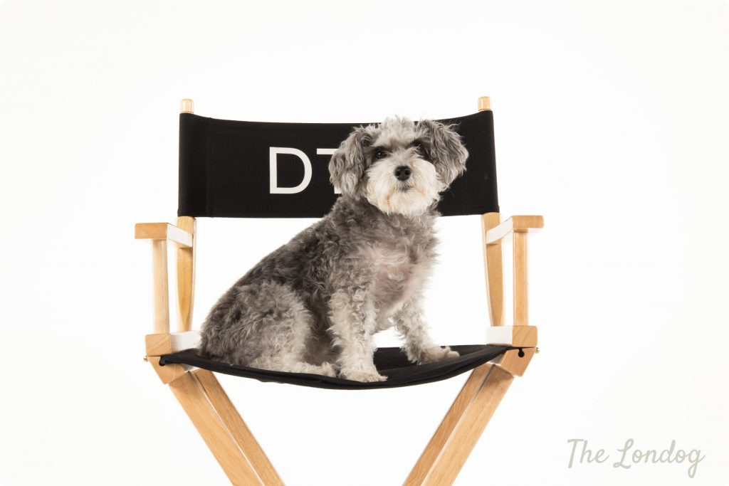 Penny the dog on her dogrector's chair during the dogs photoshoot