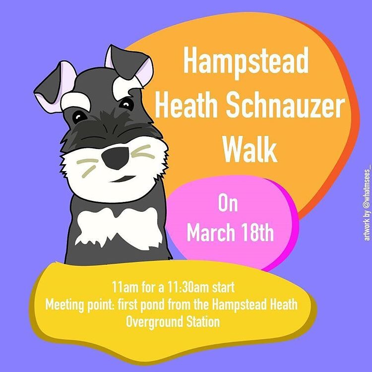 Hampstead Heath Schnauzer Walk flyer