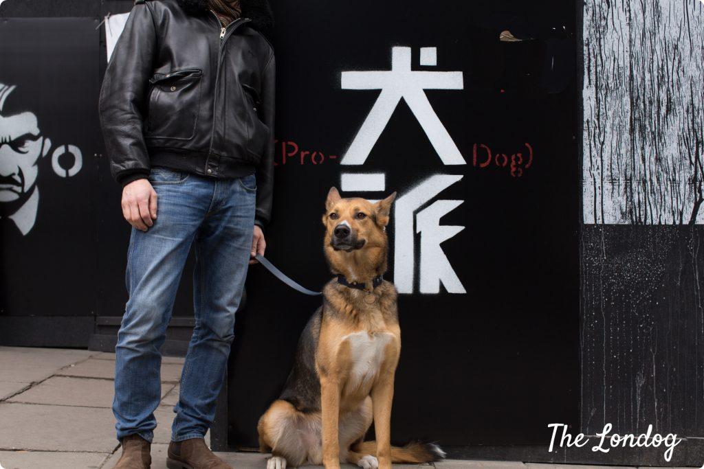 Argo the dog sits near the Pro-Dog sign of Isle of Dog movie on The Strand
