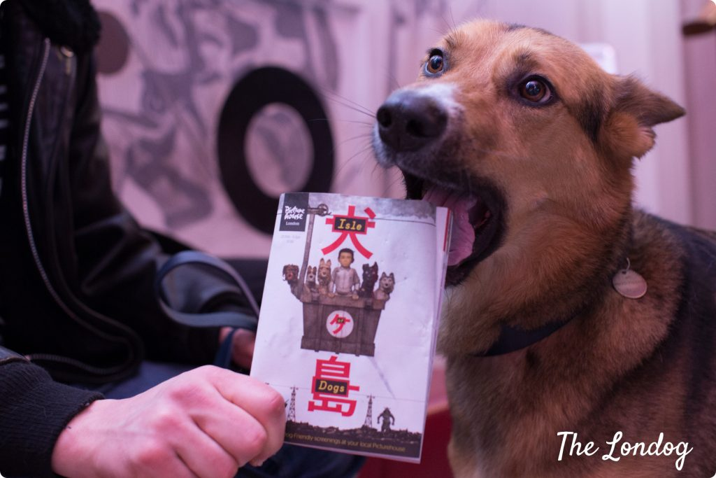 Argo the dog about to catch the Isle of Dogs flyer in his mouth
