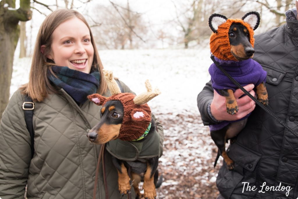 Two sausage dogs with funny hats as reindeer and fox at the Sausage Walk London 2018 in Greenwich Park
