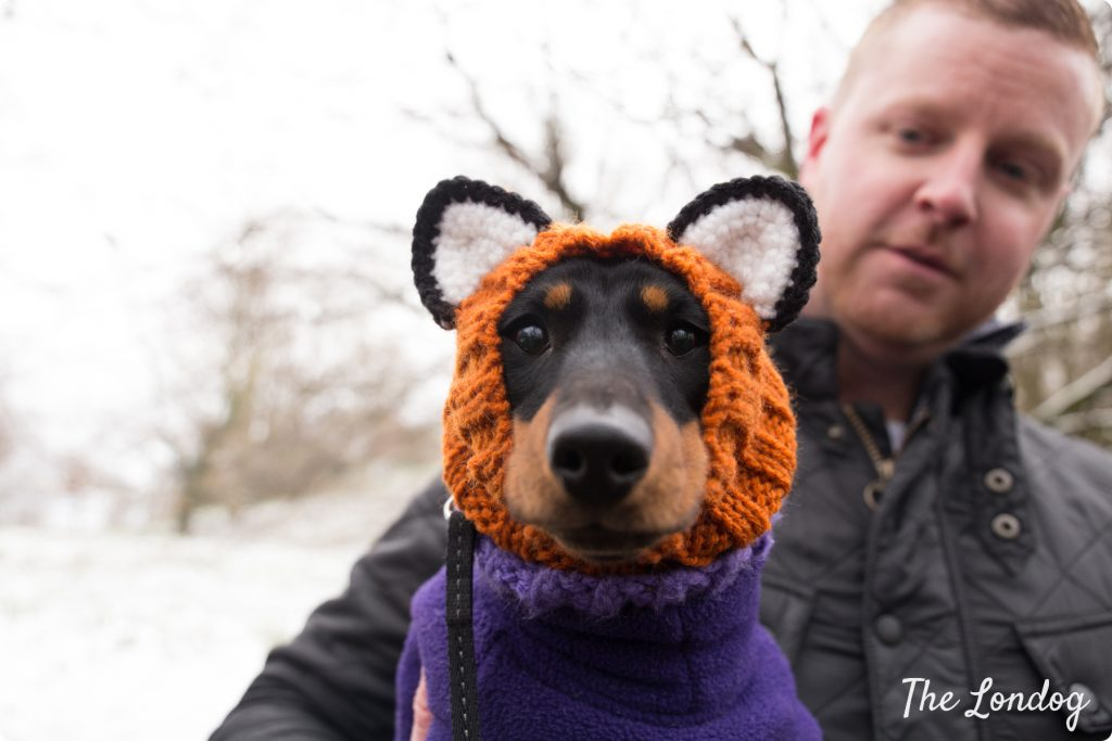 Dachshund with fox hat at the Sausage Walk London 2018