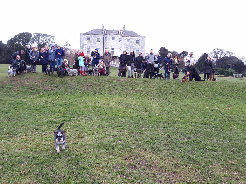 Schnauzers walk in Beckenham Place Park