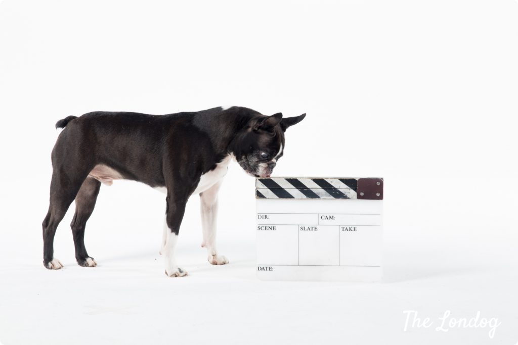 Darwing dog and clapboard