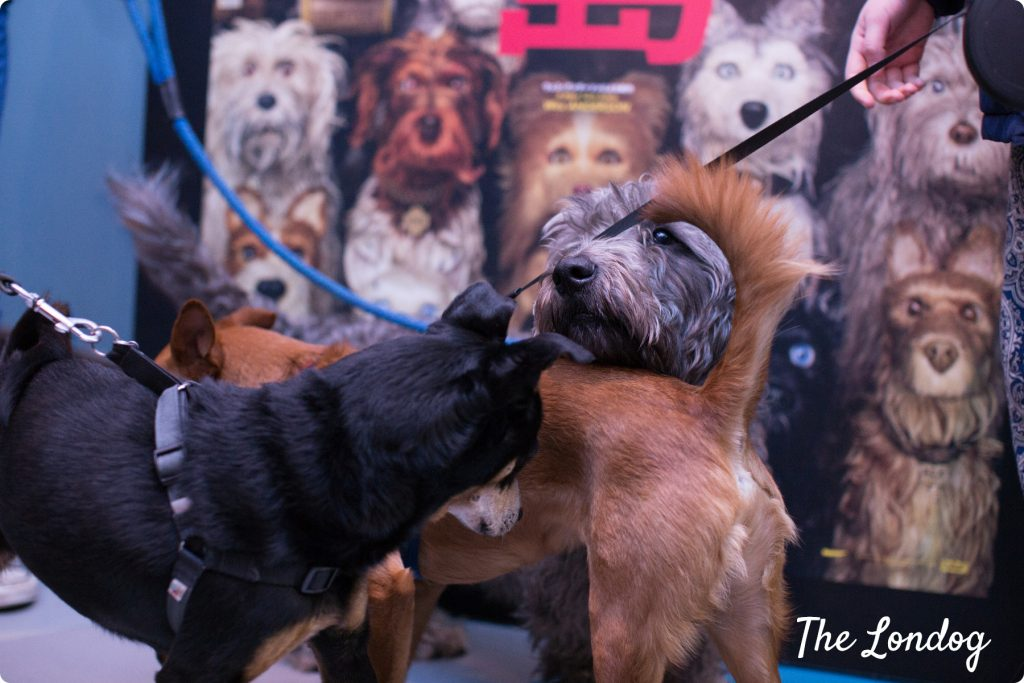 Three dogs getting tangled sniffing each other in front of Isle of Dogs movie cardboard at the cinema