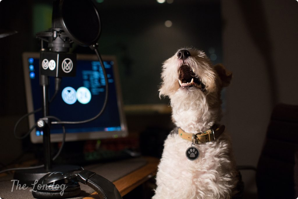 "Macy the fox terrier ""sings"" at Monocle's radio studios"