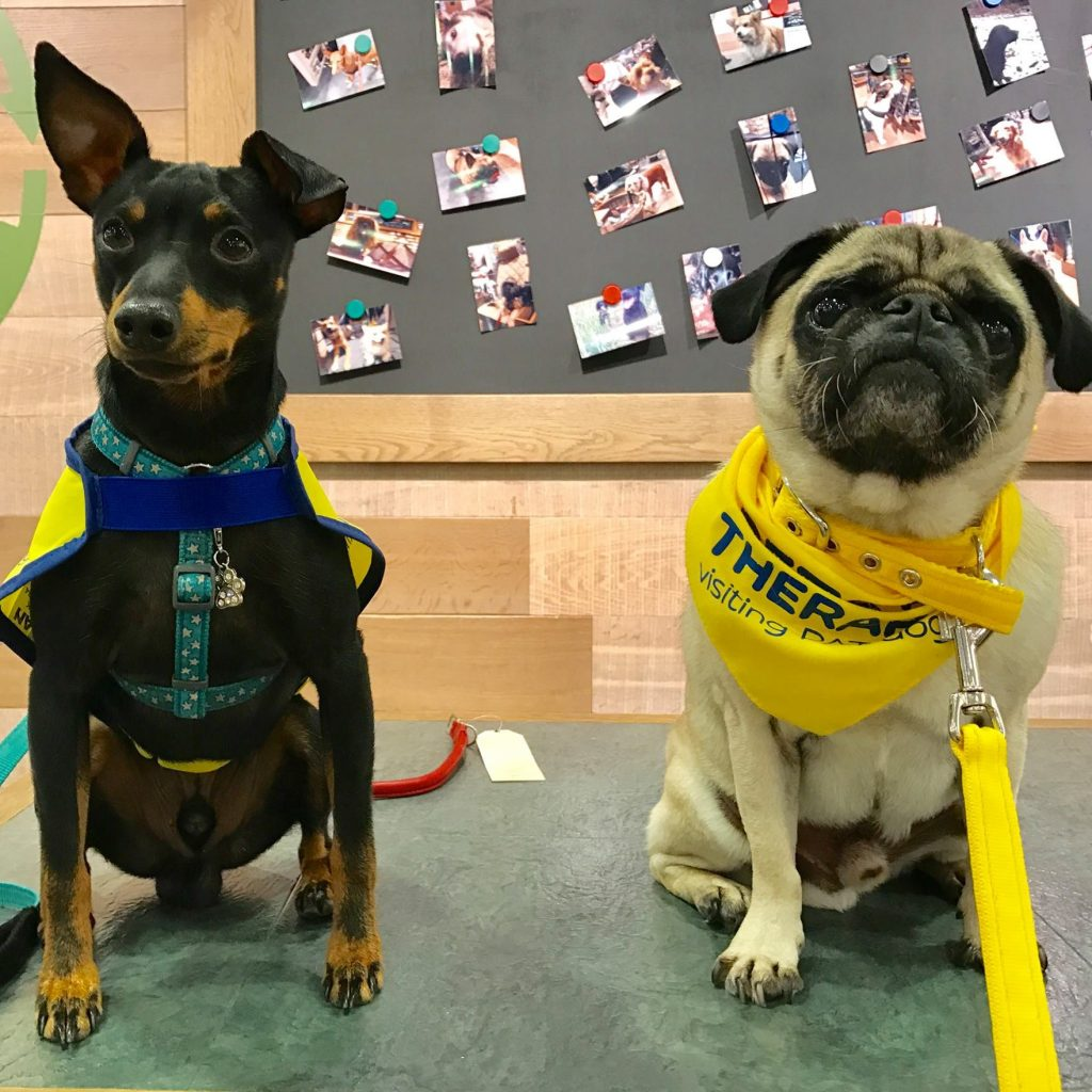 Pets As A Therapy dogs