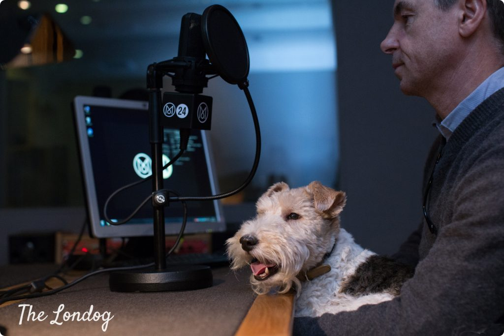 Macy the dog sits on Andrew Tuck's lap at Monocle Radio recording studio