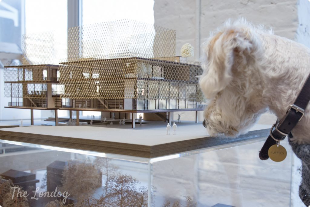 Studio dog looks at two tiny plastic men in an architectural model