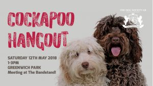 Cockapoo meetup banner