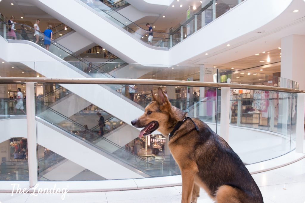 Dog at Peter Jones Sloane Square