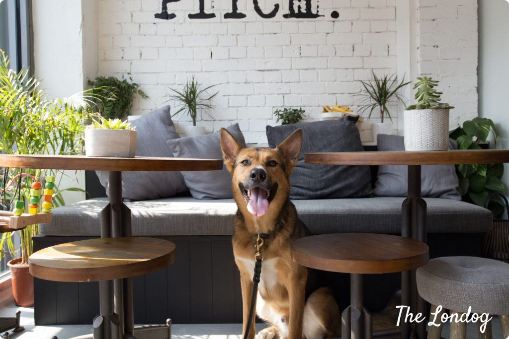 dog between tables ad dog-friendly cafe and gym