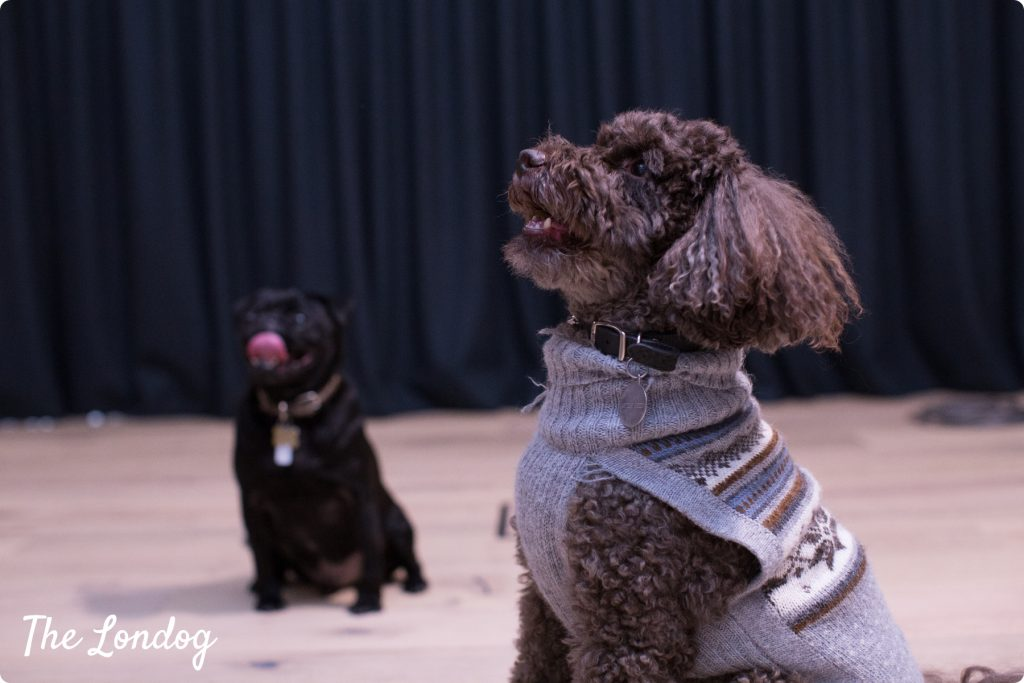 Two Google office dogs pose for treats at the YouTube Space London