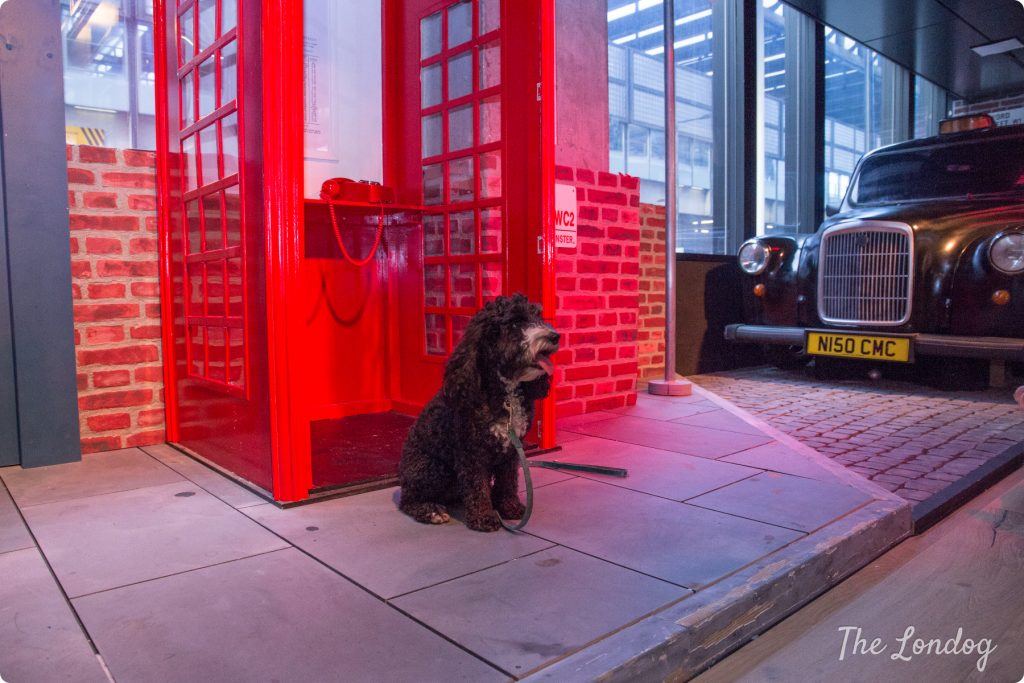 Doogler Cockapoo in front of red telephone cabin at the YouTube Space
