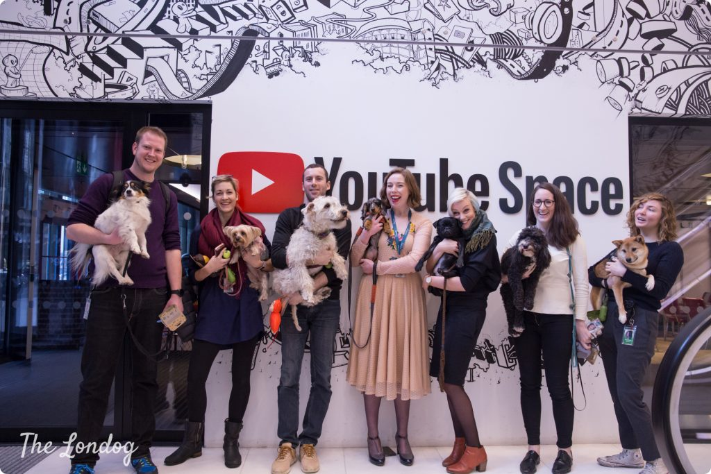 Seven dooglers pose with their owners at Google Kings Cross