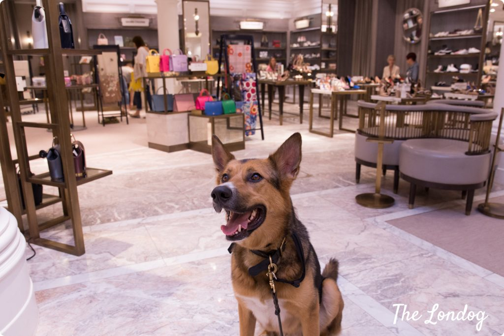 Dog at dog-friendly department store Fenwick in London