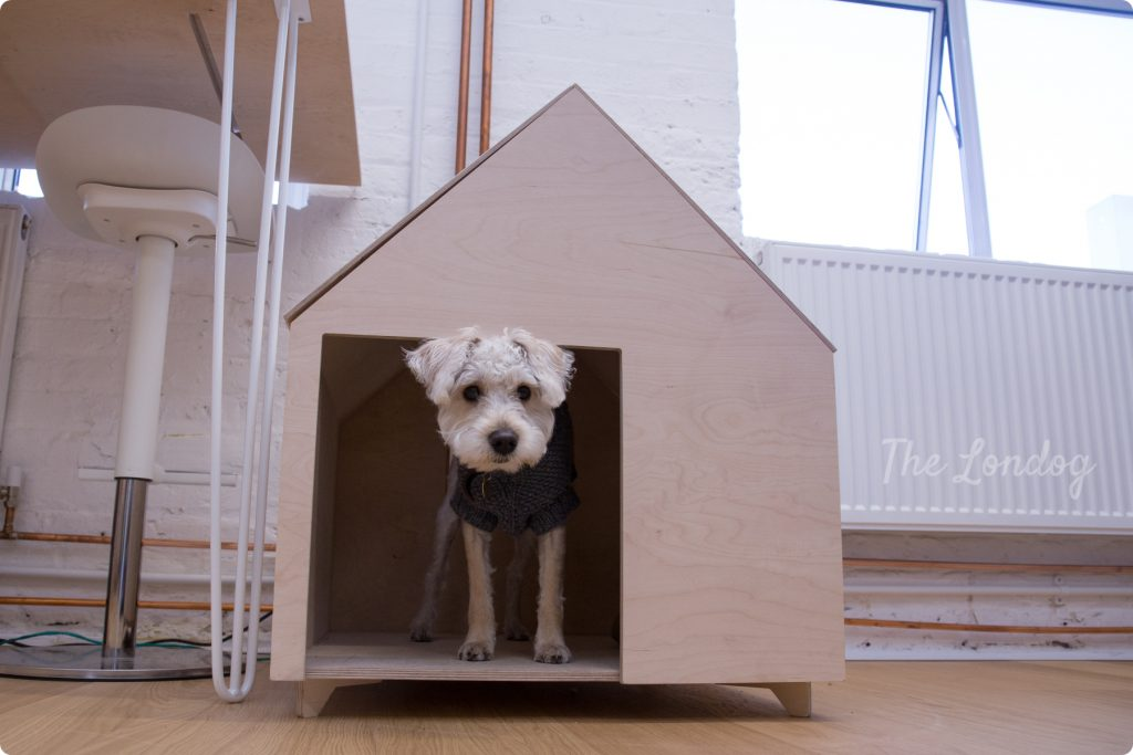 Little studio dog peeks out of his wooden dog house at the architectural studio