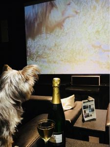 doggie cinema club