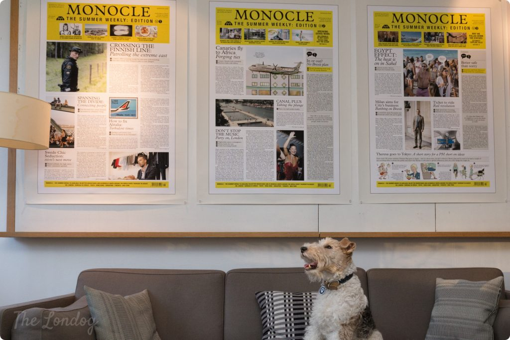 Macy the fox terrier sits on the sofa at Monocle's office with some prints hanging on the wall