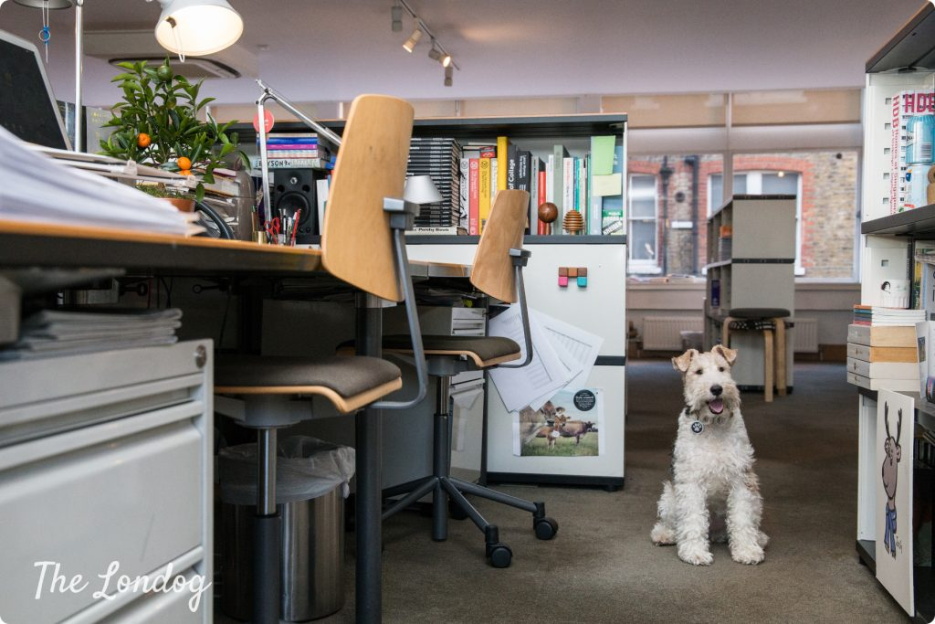 Monocle magazine London office, with Macy the dog sitting on the floor