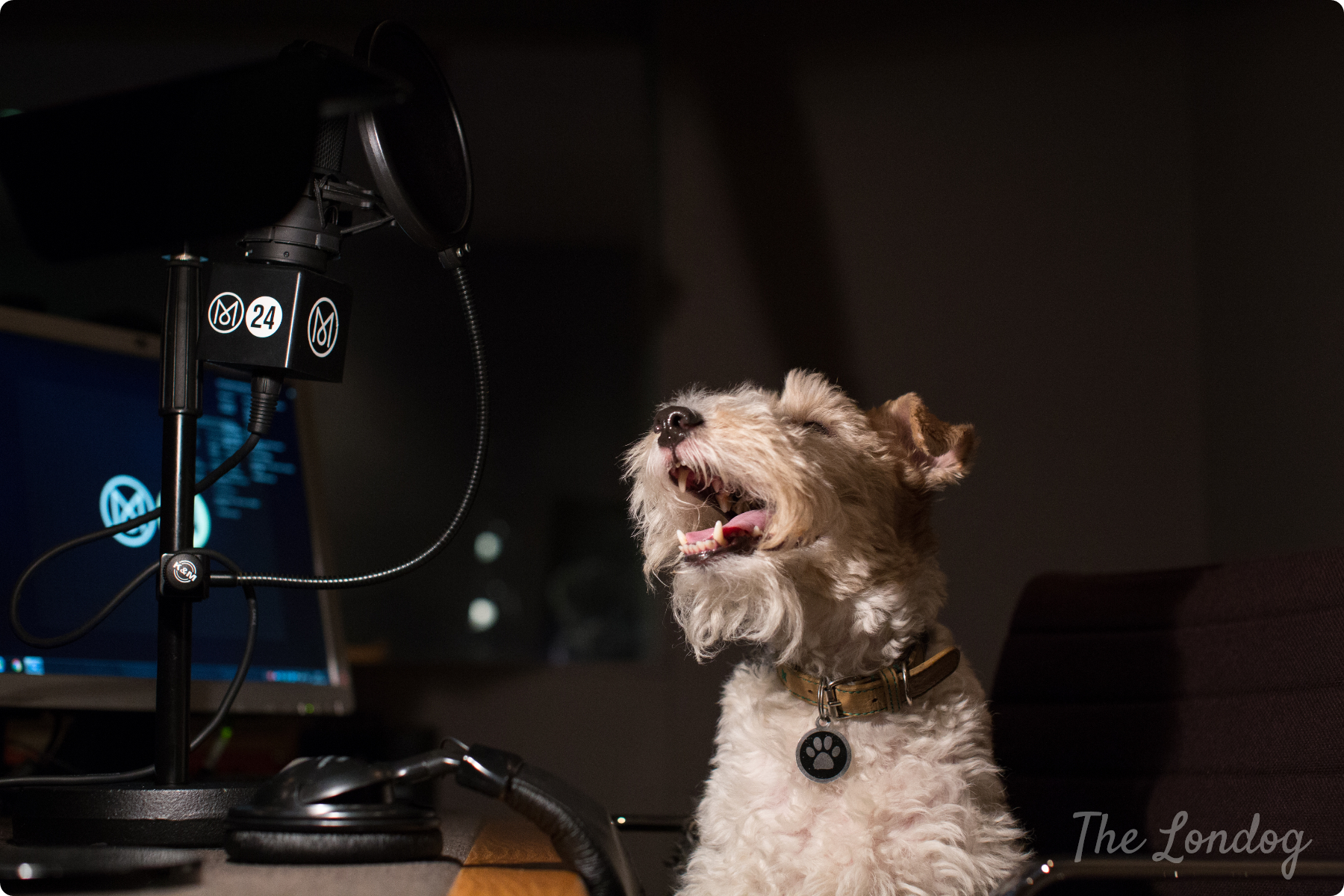 Macy the dog at Monocle Radio's recording studio in the dark