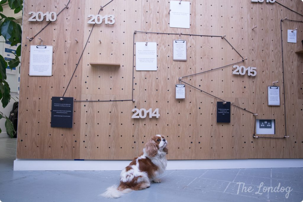 Nora the office dog Cavalier sits in front of a wooden board with year numbers at TransferWise offices