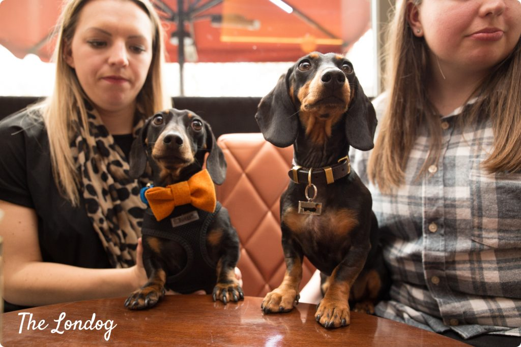 Sausage dogs with paws on the table at the bar