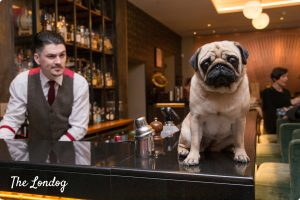 Pug on the counter of the bar while barman prepares cocktails