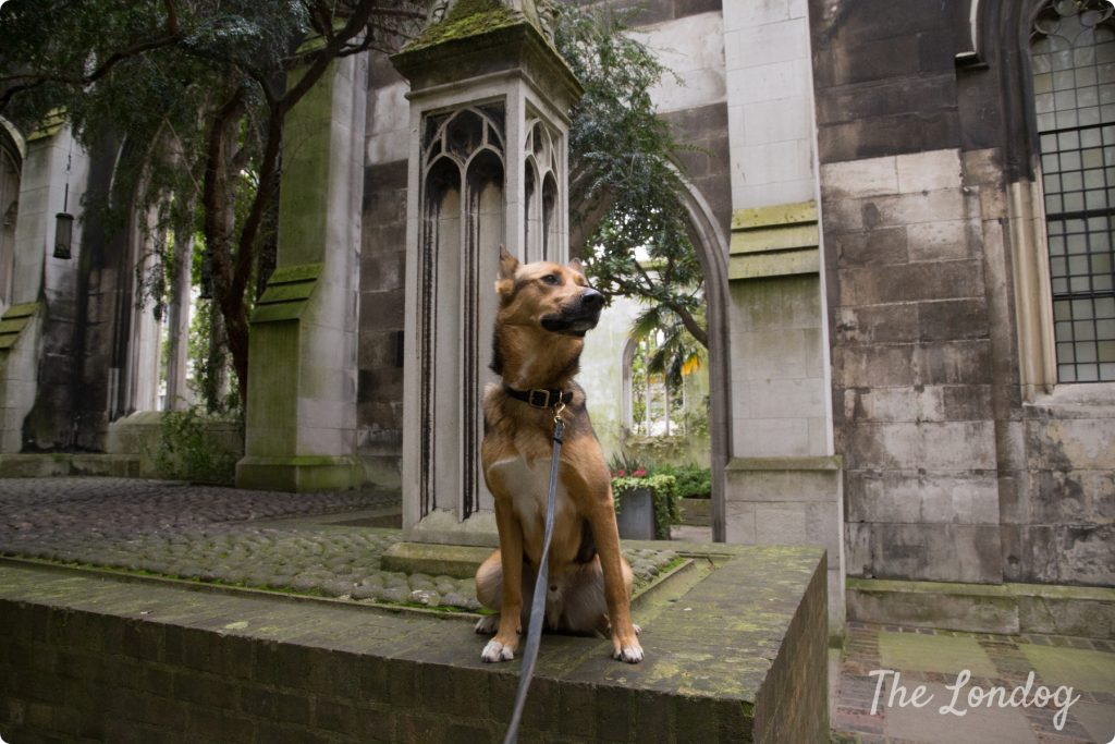 Dog at St Dunstan in the East